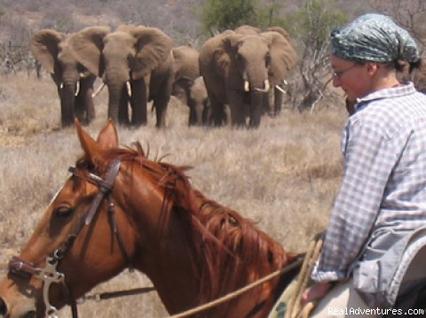Who's watching who? - Horseback adventures on the Slopes of Kilimanjaro