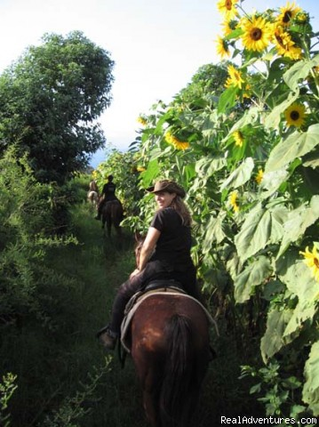 Farm environment - Horseback adventures on the Slopes of Kilimanjaro