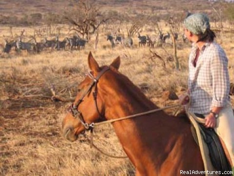- Horseback adventures on the Slopes of Kilimanjaro