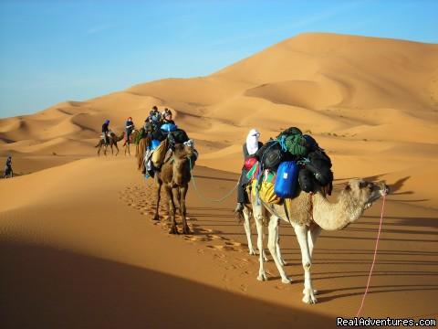 Ksar Bicha Hotel In Merzouga: merzouga camel trekking