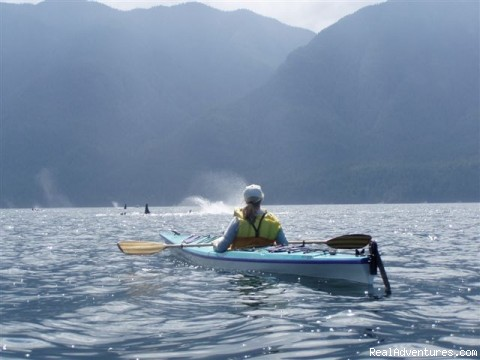 Have a whale of a day - Sea Kayaking Adventures on Vancouver Island