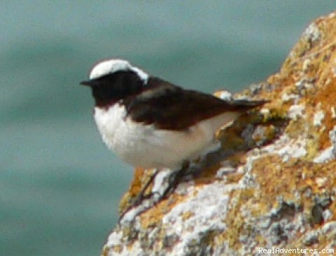 Stunning variety of passerines - Birdwatching and birding tours in Bulgaria