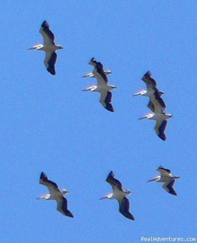 Terrific migration along the Via Pontica - Birdwatching and birding tours in Bulgaria