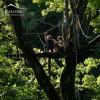 Zipline to canopy platform