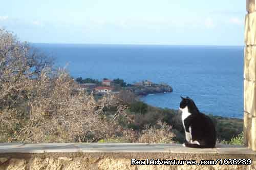 Molly the Zen cat - Yoga, walking and holistic holidays in Greece.