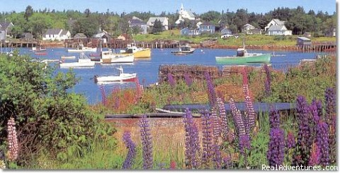 Corea Harbor - looking into the harbor (#2 of 4) - Black Duck Inn - the way Maine used to be