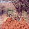 Kenya, Tanzania & Uganda Safaris, Tours & Holidays Nairobi, Kenya Wildlife & Safari Tours