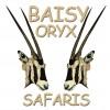 Baisy Oryx Safaris