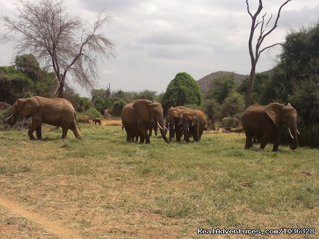 Heard of Elephants - African Home Adventure Safaris