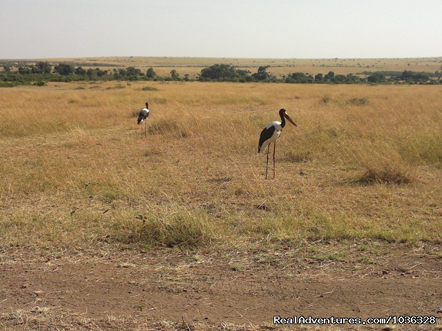 - African Home Adventure Safaris