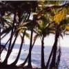 Fantastic pristine coastline