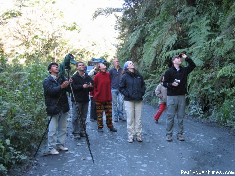 wildlife observation in Manu cloudforest (#3 of 6) - Explore Manu Rainforest and go Trekking in Peru