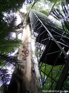 Camungo Canopy Tower - Explore Manu Rainforest and go Trekking in Peru