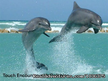 SWIM  WITH THE DOLPHINS  - Adventure of a life time - Fly Drive Jamaica