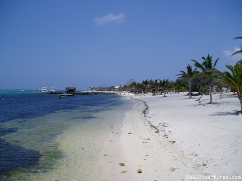 Uncrowded White Sand Beaches - Little Cayman Island - Conch Club Condos & Divers