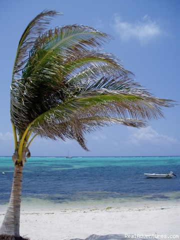 Tropical Paradise - Little Cayman Island - Conch Club Condos & Divers