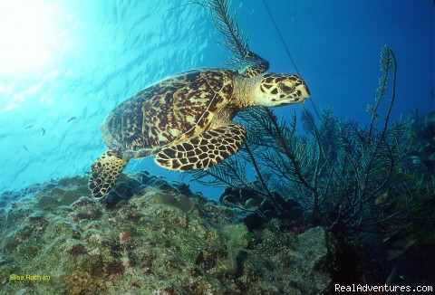 World Famous Scuba Diving - Little Cayman Island - Conch Club Condos & Divers