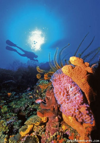Diving right off shore - St.Lucia's Romantic Honeymoon Adventure Hideaway