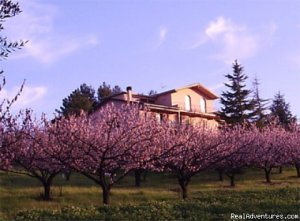 Beautiful apartments along the Chianti road Terricciola, Italy Vacation Rentals