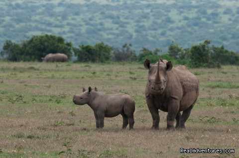 Black Rhino (#9 of 26) - Climbing Mt Kenya/kilimanjaro/wildlife Safaris