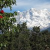 High Mountains and Flowers: Trekking in Indian Himalayas, Rishikesh, India