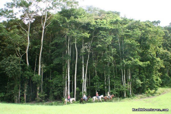 Stunning rainforest backdrop | Image #13/13 | Horseback riding Jaco with Discovery Horse Tours