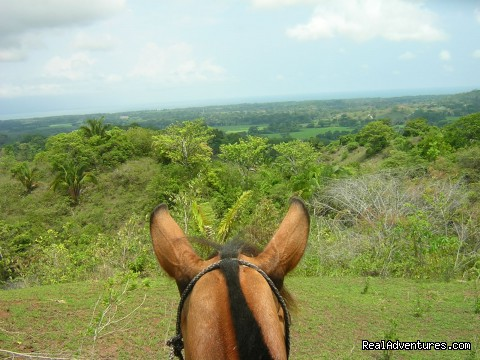 Ear ear (#17 of 23) - Horseback riding Jaco with Discovery Horse Tours