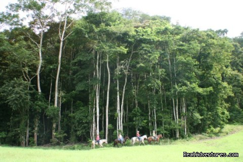 Stunning rainforest backdrop (#21 of 23) - Horseback riding Jaco with Discovery Horse Tours