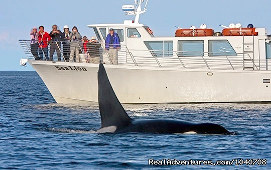 Whale Watch& Wildlife Tours April - October Whale Watching Friday Harbor, Washington