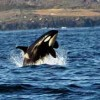 Whale Watch& Wildlife Tours April - October