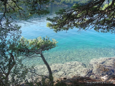 - Elaphite Islands & Dubrovnik Walking Tour