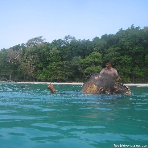 Rajan - Our Swimming Elephant