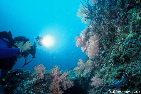 Under water (#6 of 13) - Specialized in Scuba diving, Surfing trips
