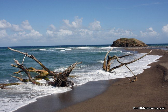 Black sand beach- isloated and natural | Image #20/22 | Back to Eden Strawberry Fields Together Jamaica