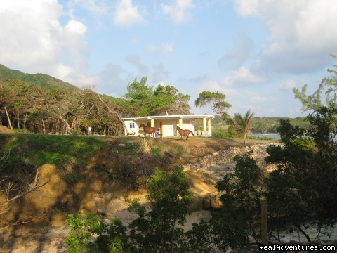 Dream Maker, one bedroom on private beach - Back to Eden Strawberry Fields Together Jamaica