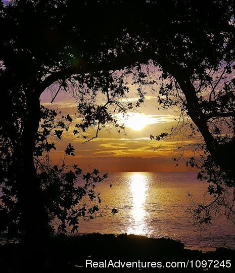 awesome sunrise from Sunrise Magic - Back to Eden Strawberry Fields Together Jamaica
