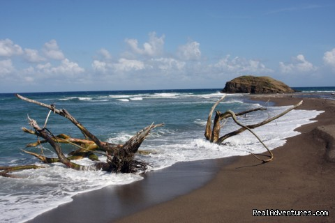 Black sand beach- isloated and natural - Back to Eden Strawberry Fields Together Jamaica