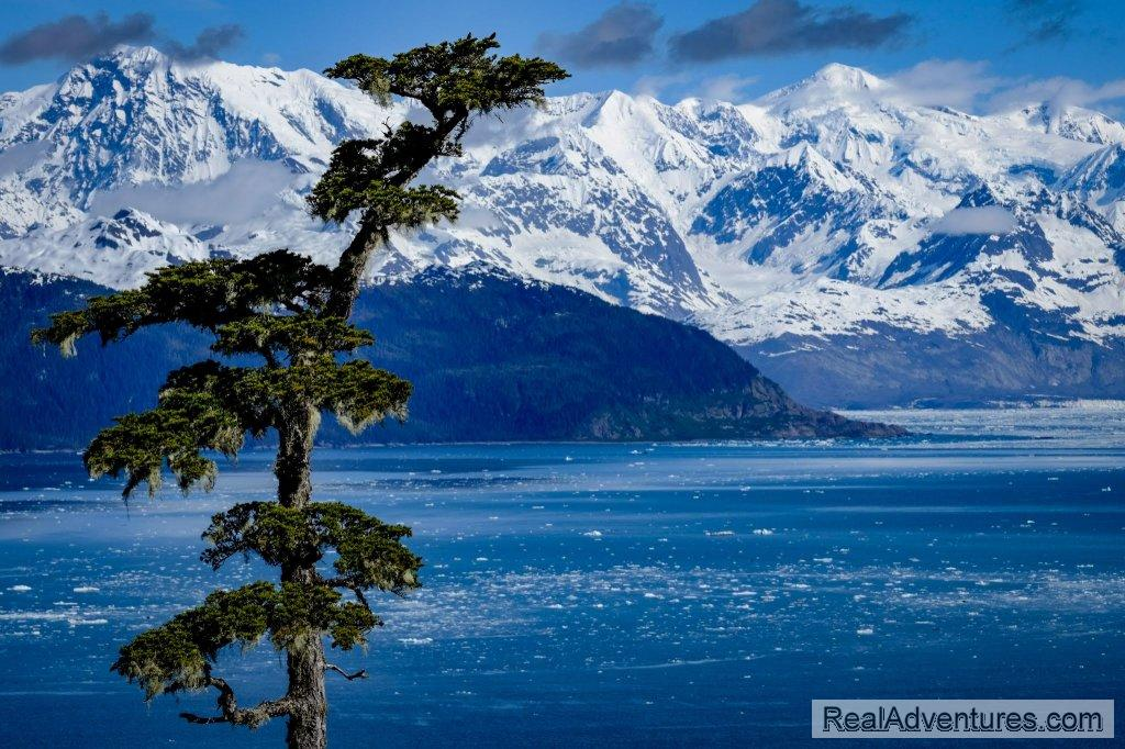 Columbia Bay | Image #3/13 | Prince William Sound Sea Kayaking and Hiking Tours