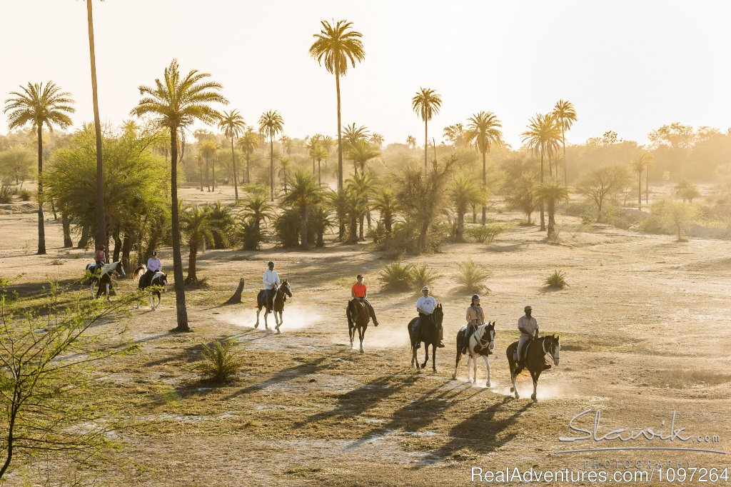 Princess Trails is a family business in the romantic city of Udaipur, organising Horsback Safaris and Riding Holidays on Marwari horses in Rajasthan/India.