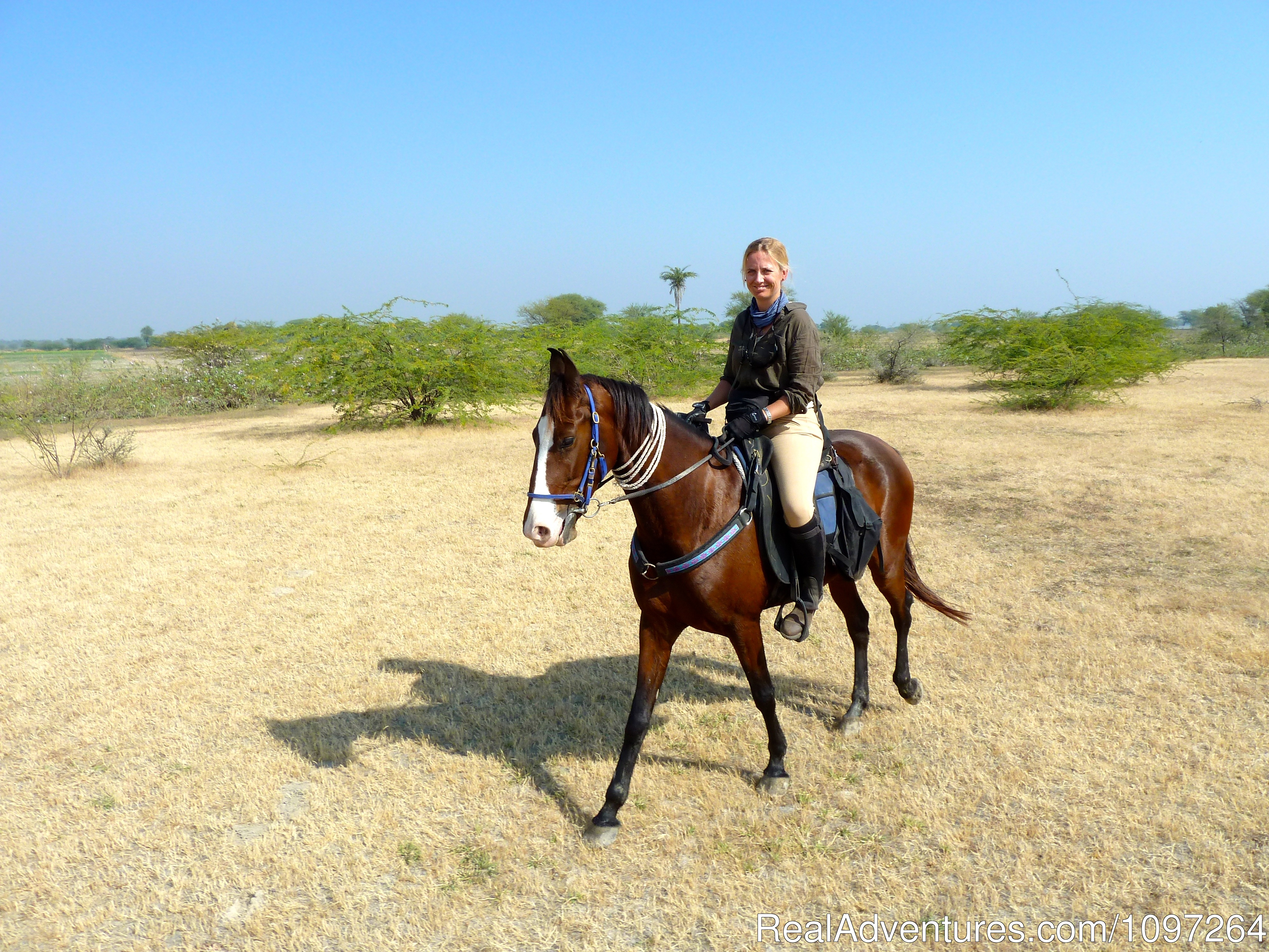 Marwari mare and rider