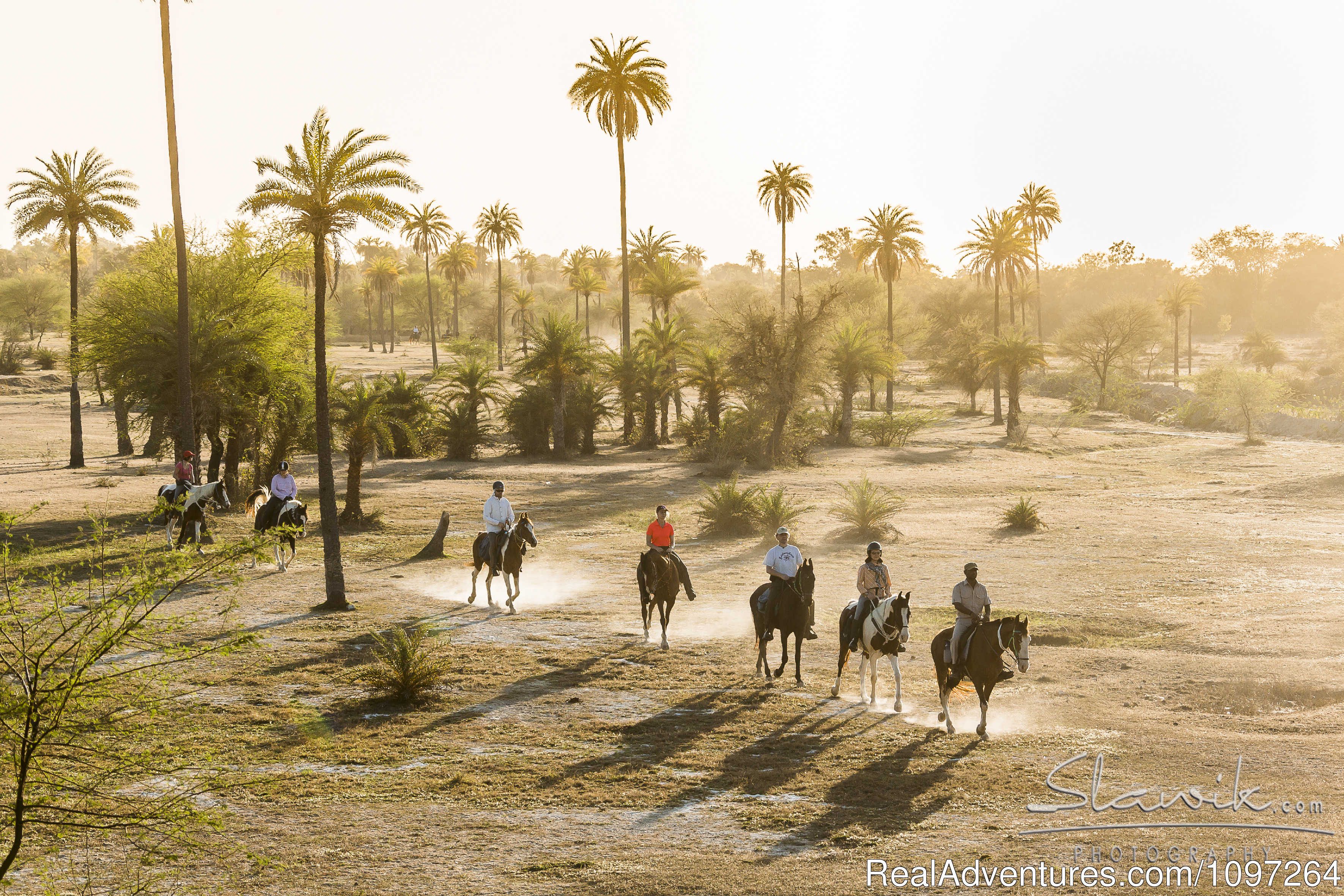 Horse Safaris in Rajasthan