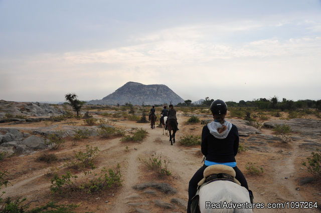 Desert Ride - Horsebacksafaris on Marwari Horses in Rajasthan