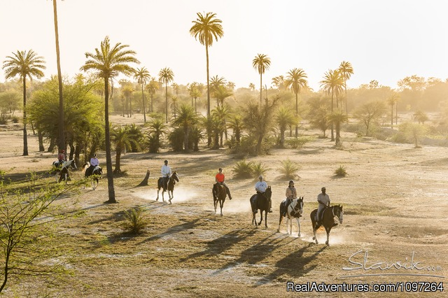 Horse Safaris in Rajasthan - Horsebacksafaris on Marwari Horses in Rajasthan