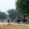 Horsebacksafaris on Marwari Horses in Rajasthan