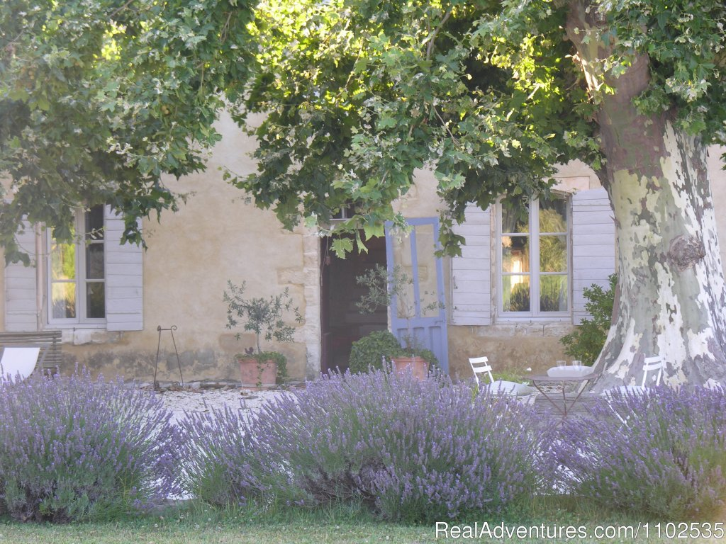Entrance Garance with Lavanders | Image #15/22 | Charming Holidays Rental & Guest House