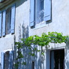 Provencal Vineyards Tonnelle