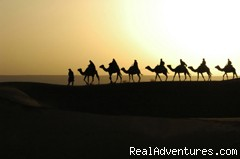 Ride camels in the Sahara Desert (#2 of 6) - Morocco Tours & Trekking - Journey Beyond Travel