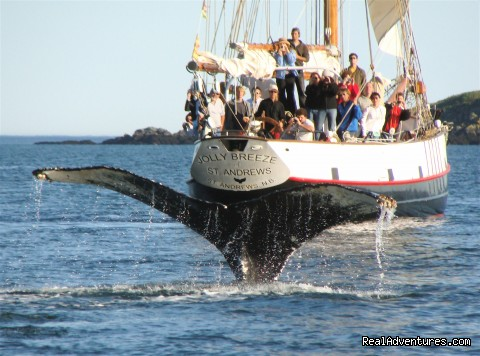 Humpback whale tail - Whale Watching