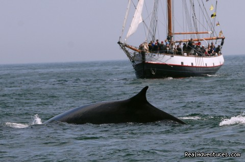 Finback whale - Whale Watching