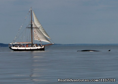 Image #9 of 20 - Whale Watching